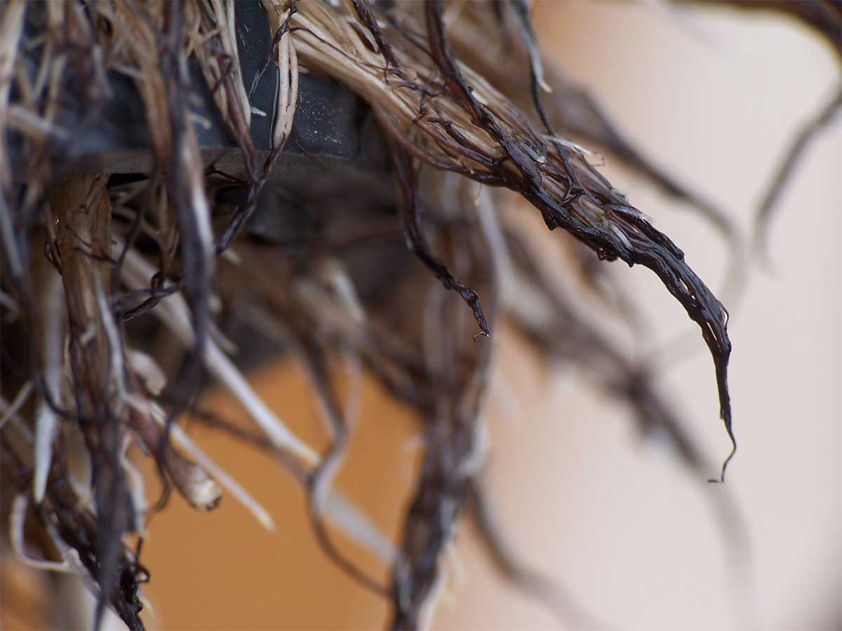 How to Prevent Root Rot