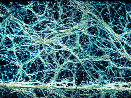 What You Need to Know About Mycorrhizae