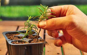 Tips for Taking Plant Cuttings