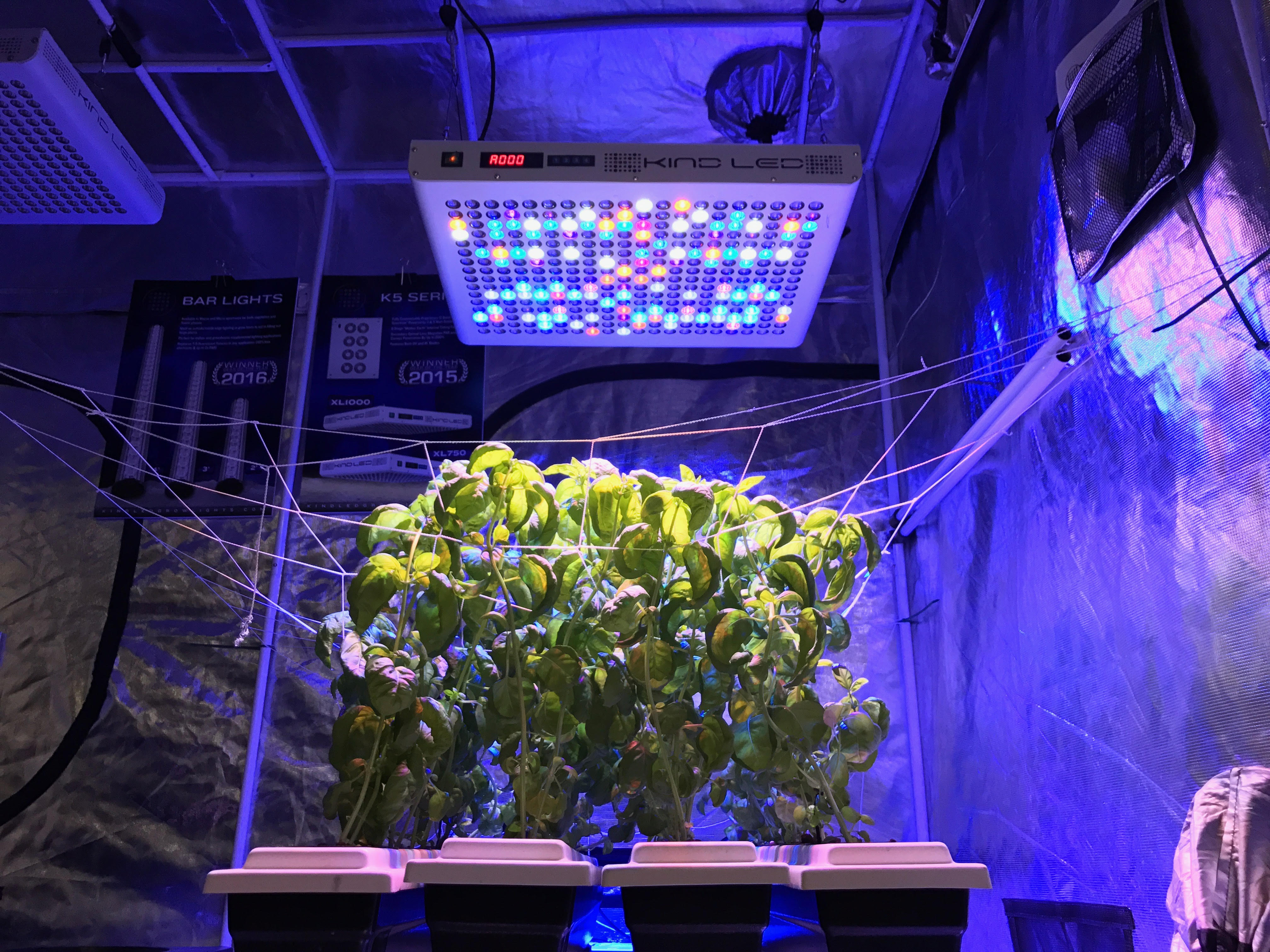 How to Prevent Odors in Your Grow Room