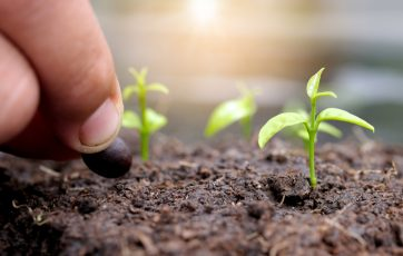 Cultivate Healthy Soil