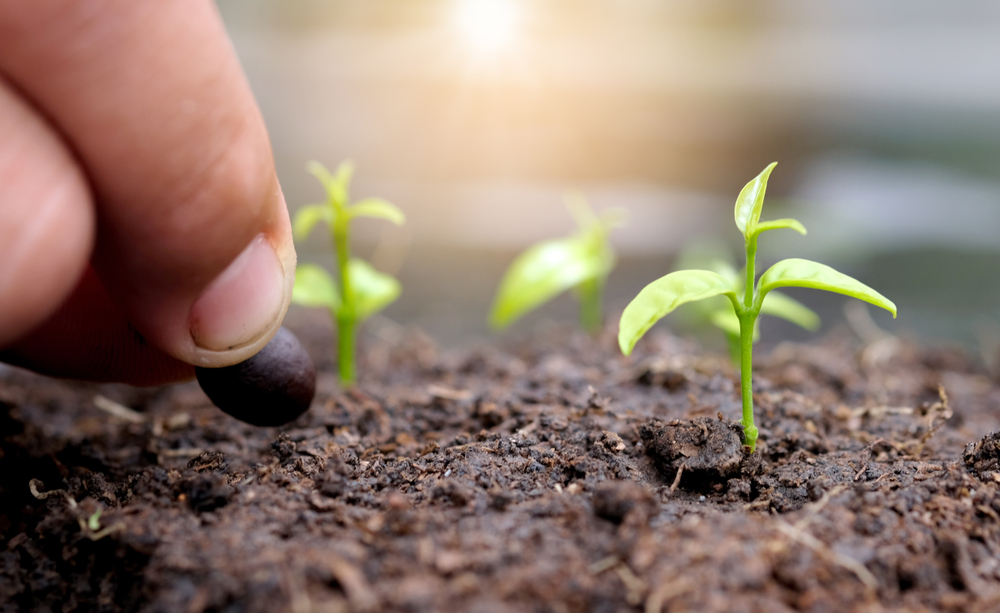 4 Tips to Cultivate Healthy Soil
