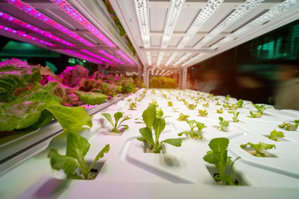 Understanding Grow Lights 101