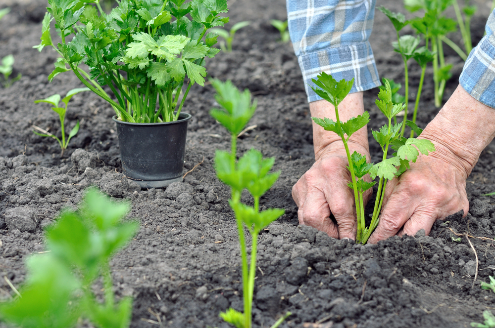 How to Grow Plants in Florida